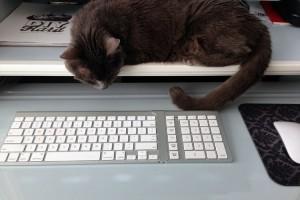 sofia working