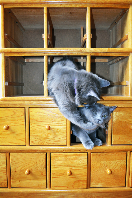 kitty-photo-bomb