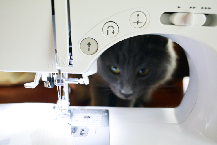Cat watches sewing