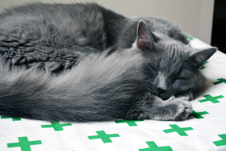 Cleo sleeping on ped bed